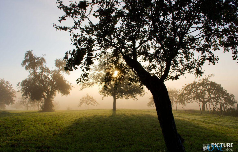 Nebelmorgen im September